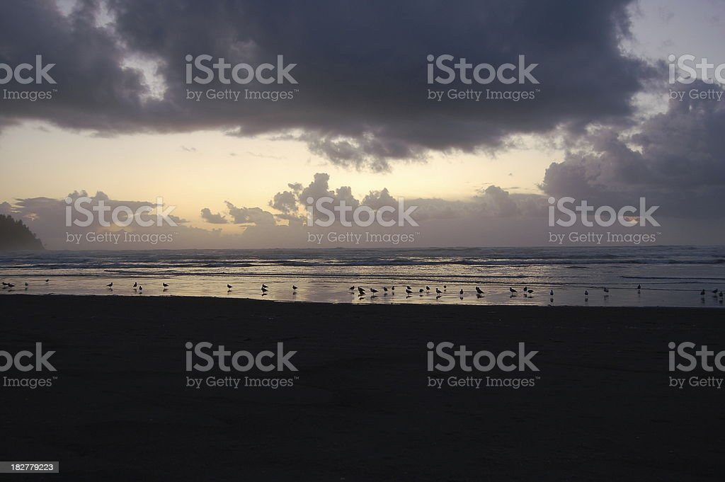 Flock of Seaguls at Sunset royalty-free stock photo