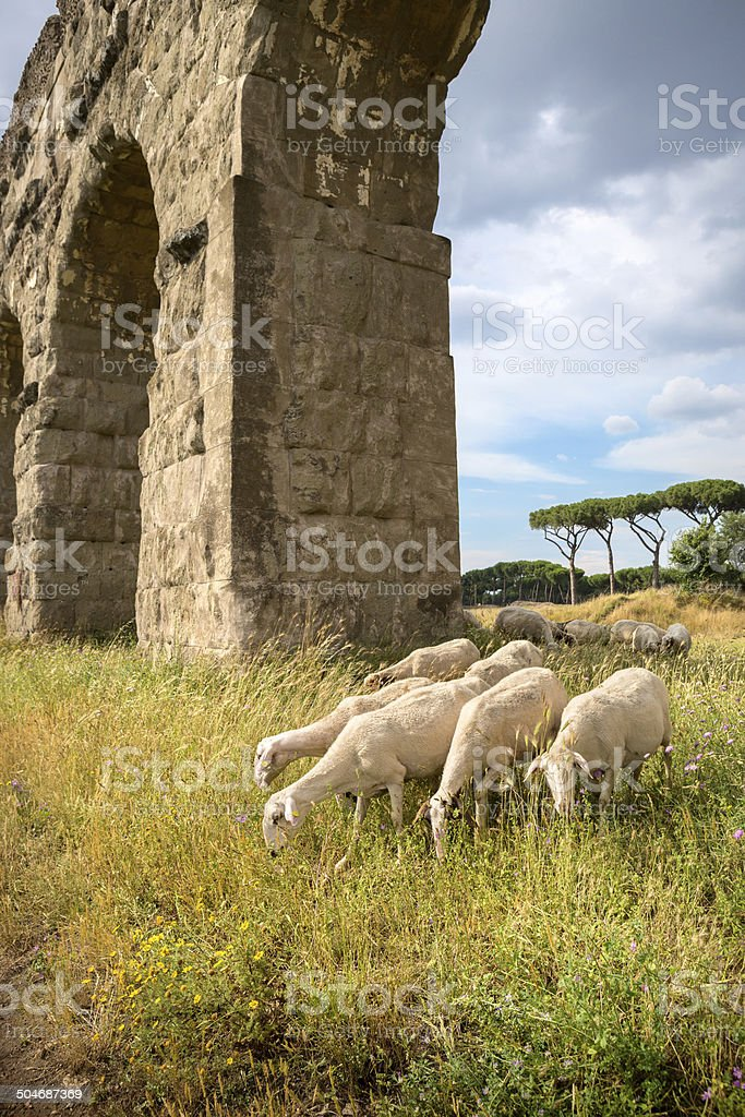 Flock of sheep by the Aqueduct, Rome Italy stock photo