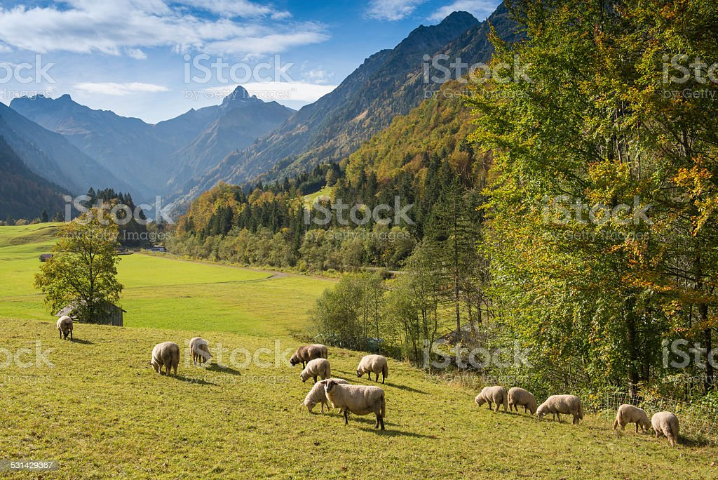 Flock of sheep in a mountain valley stock photo