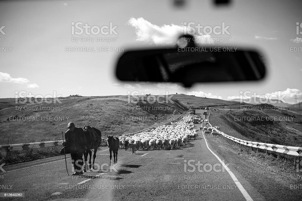 Flock of sheep in highway in Armenia stock photo