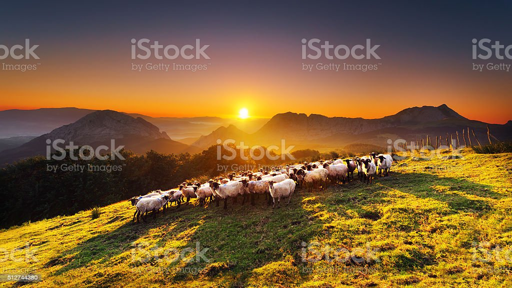 flock of sheep in Saibi mountain stock photo