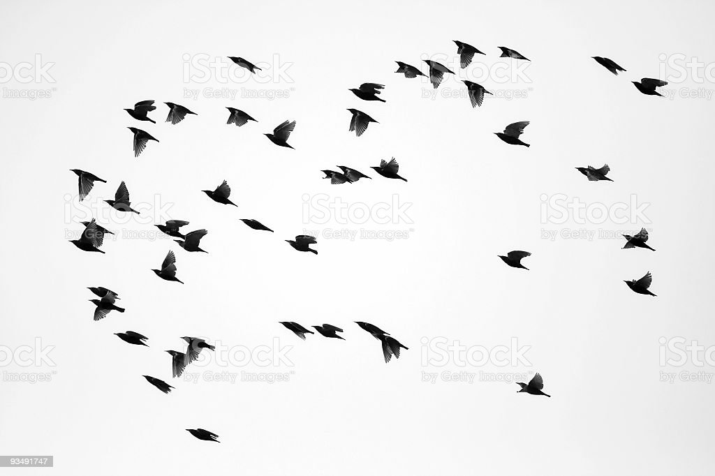 Flock of Sparrows royalty-free stock photo
