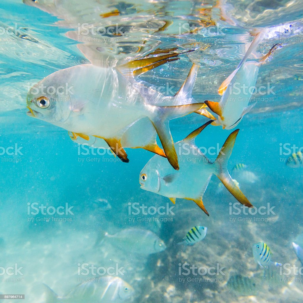 Flock of tropical fish. Hikkaduwa coral reef, Sri Lanka stock photo