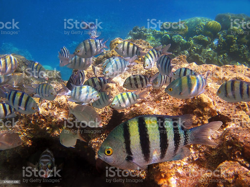 flock of tropical fish stock photo