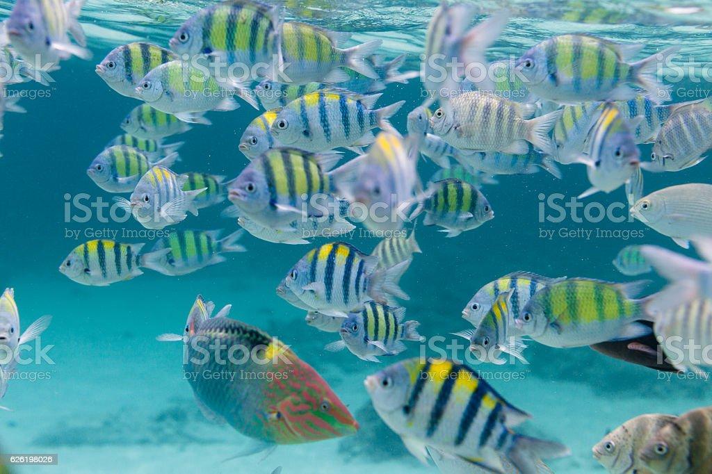 Flock of tropical fish. Similar islands, Thailand stock photo