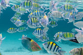 Flock of tropical fish. Similar islands, Thailand