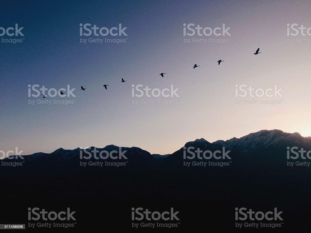 Flock Silhouette royalty-free stock photo