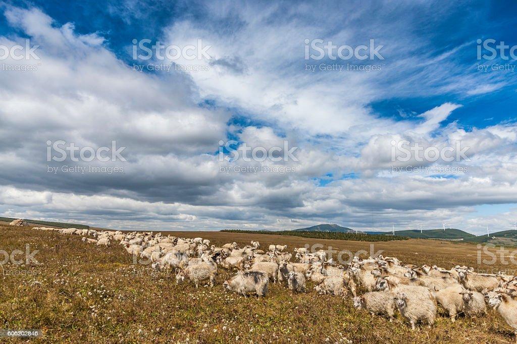 Flock under a blue sky stock photo