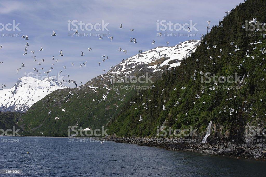 Flocks & Water Falls stock photo