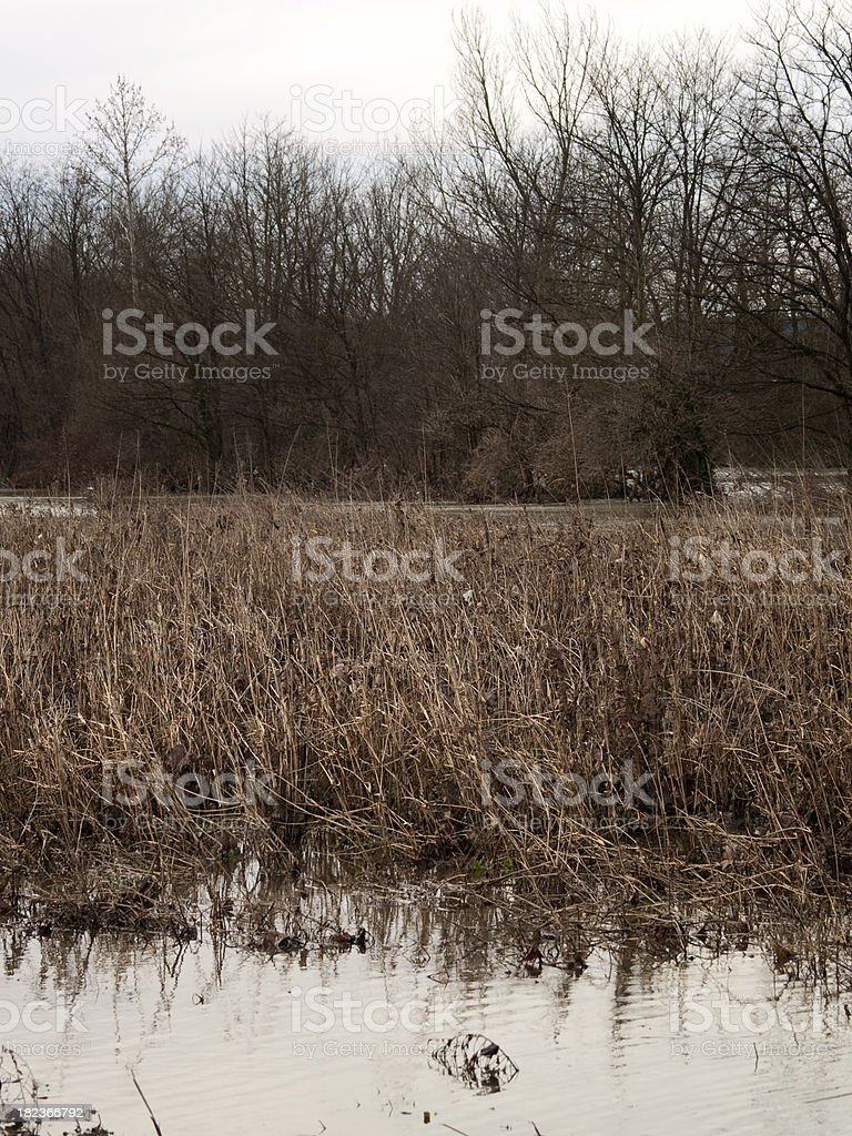 Flooded area royalty-free stock photo