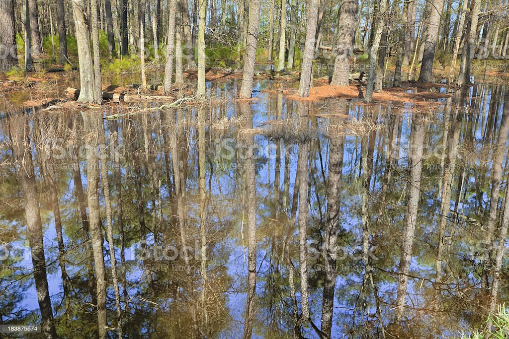 Flooded Coastal Forest, Trees and Blue Sky Reflecting in Water stock photo