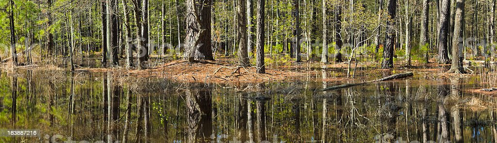 Flooded Coastal Forest With Magnificent Reflection of Trees in Water stock photo