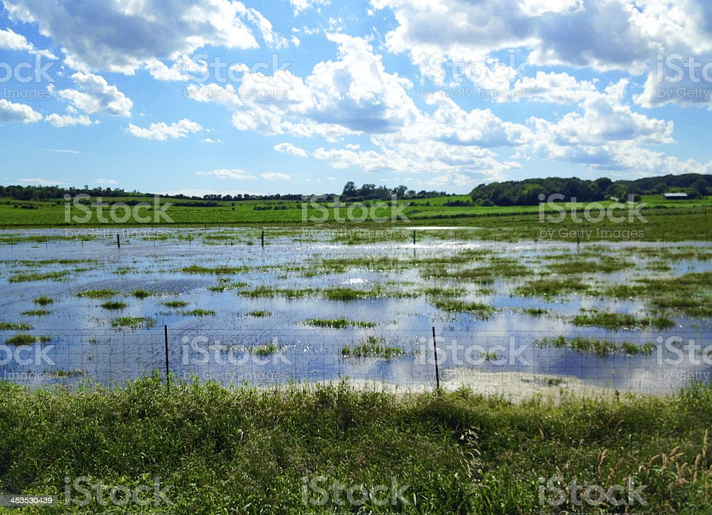 Flooded cow pasture royalty-free stock photo