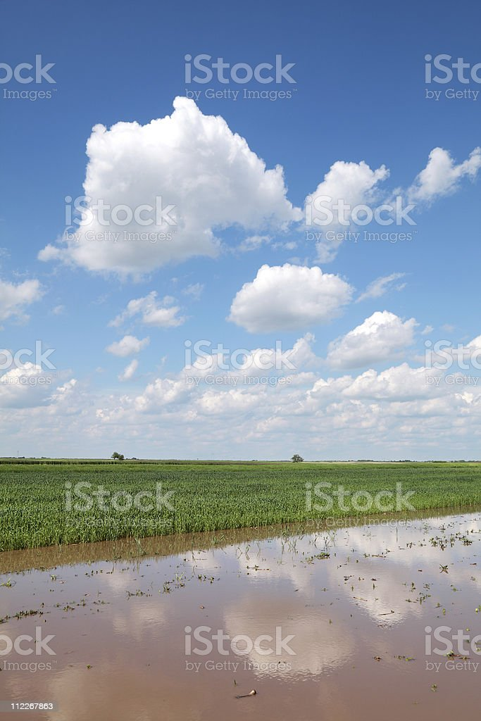 Flooded field royalty-free stock photo