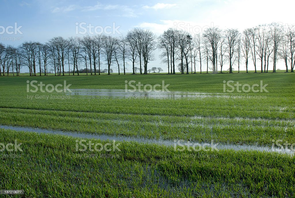 Flooded field. stock photo