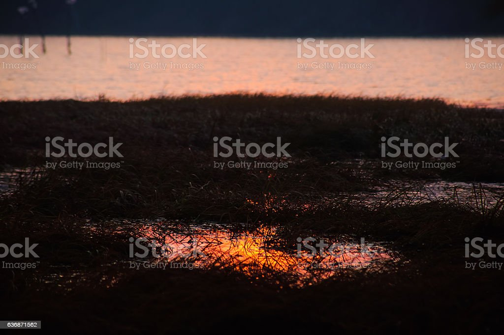 Flooded grassland at sunrise, late Autumn at Danube River stock photo