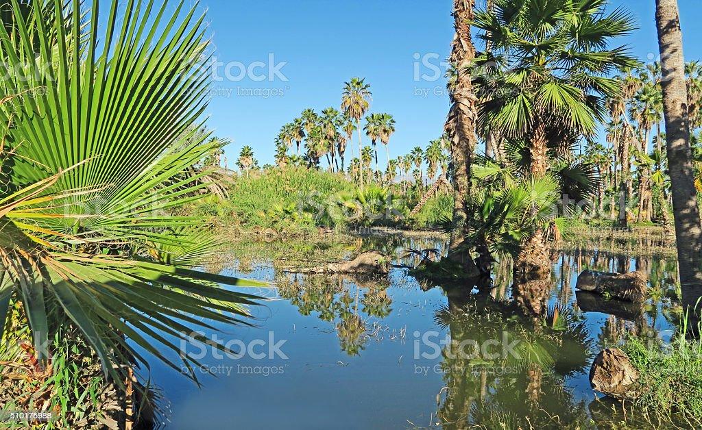 Flooded picnic area in San Jose del Cabo estuary stock photo