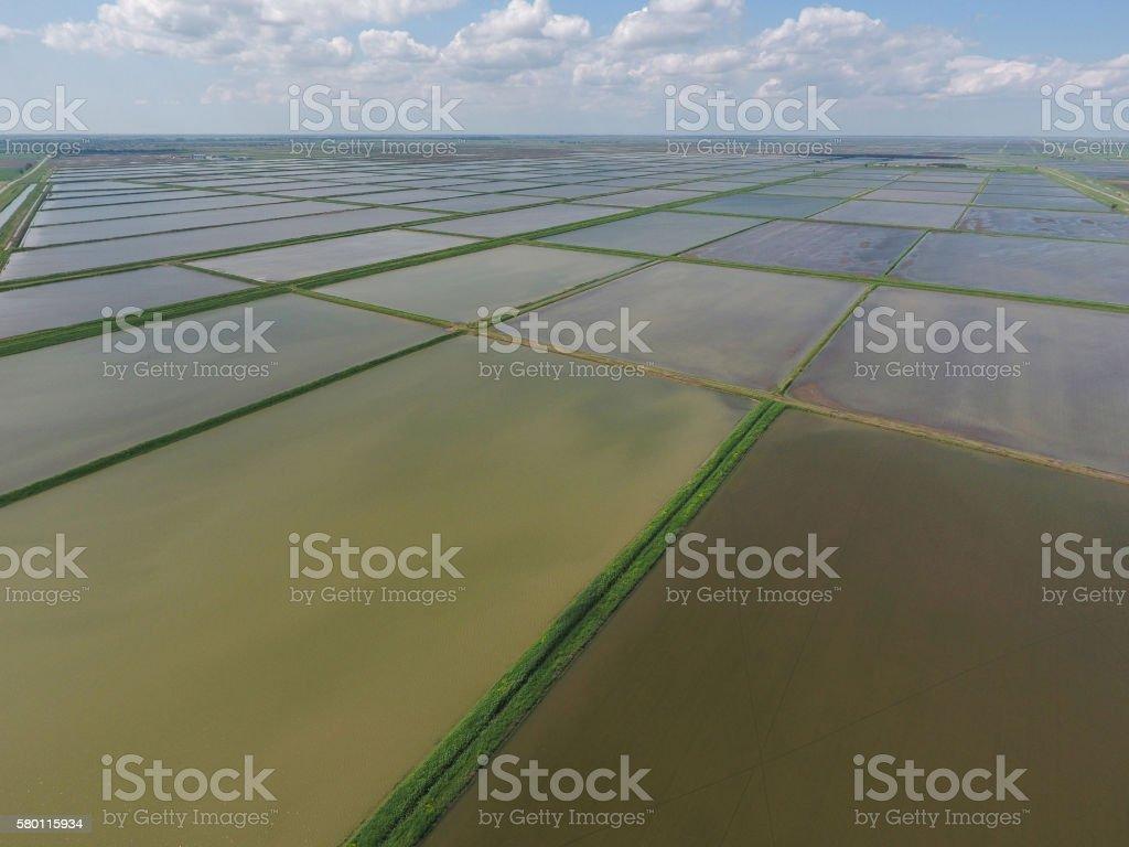 Flooded rice paddies. Agronomic methods of growing rice stock photo