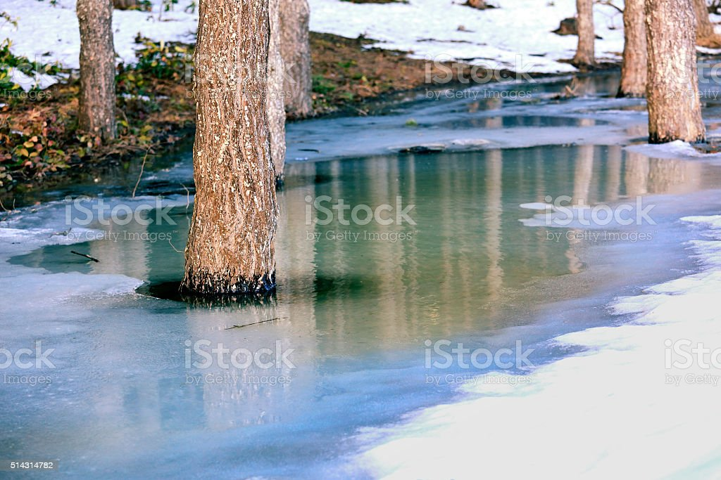 Flooding and Tree Trunk stock photo