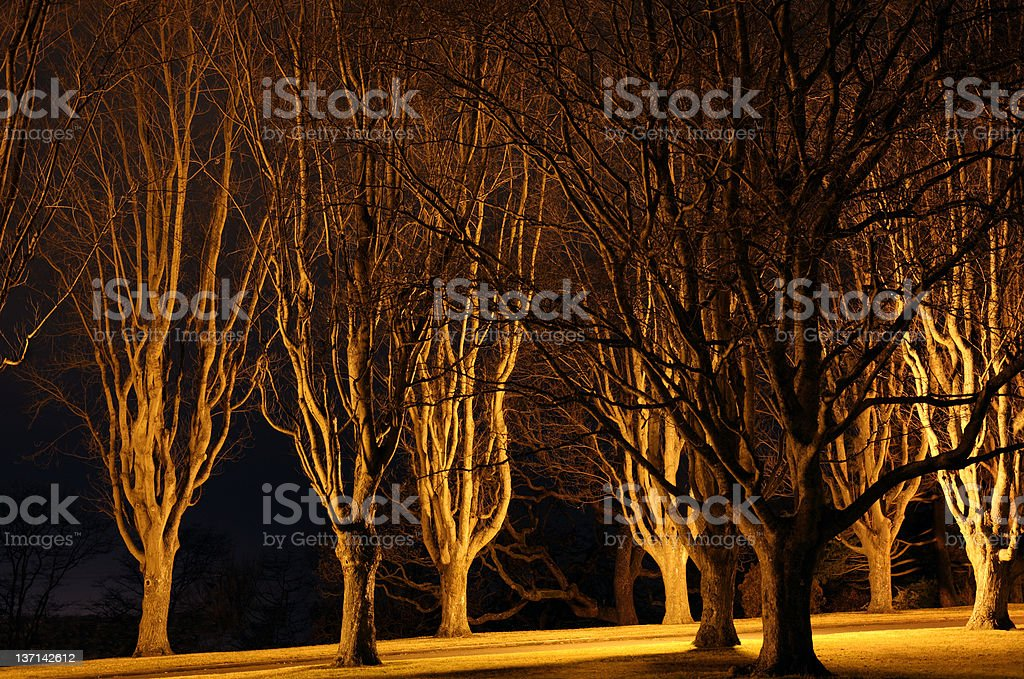 Floodlit Trees on College Campus stock photo