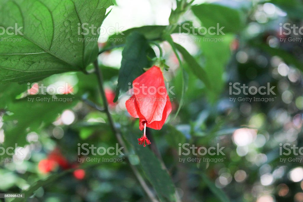 Flor 01 royalty-free stock photo