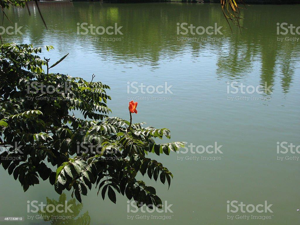 Flor contemplando el lago stock photo