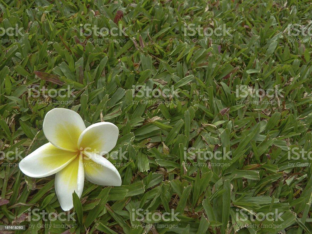 flor stock photo