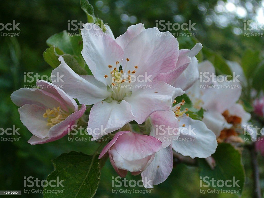 Flor royalty-free stock photo