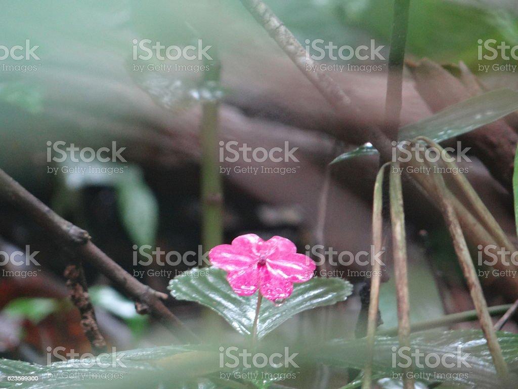 Flor rosa de quintal royalty-free stock photo