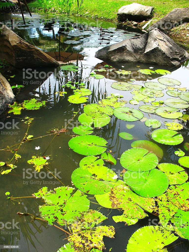Flora and fauna in the park pond stock photo