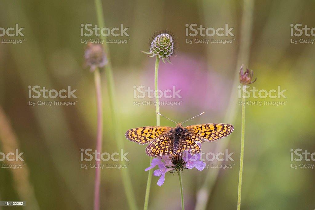Flora and fauna stock photo