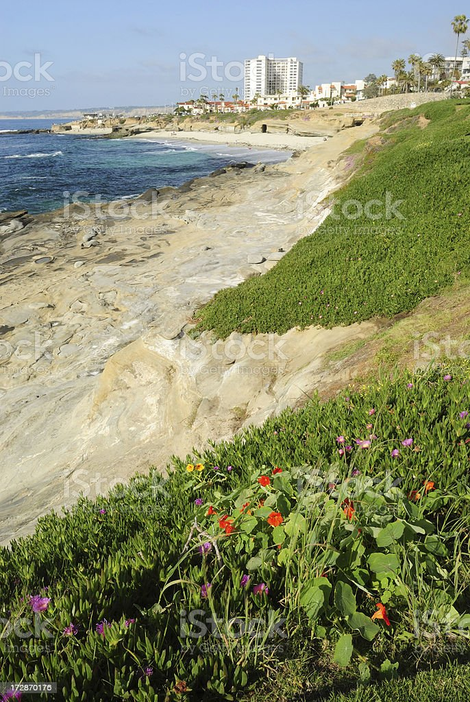 Flora at La Jolla Cove stock photo