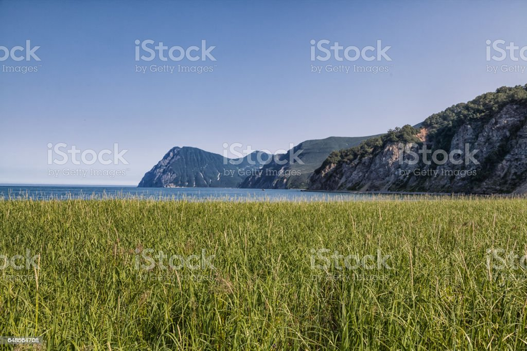 Flora of Kamchatka. Forests and fields. Nature of Kamchatka. Lan stock photo