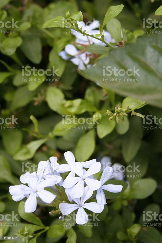 flora royalty-free stock photo