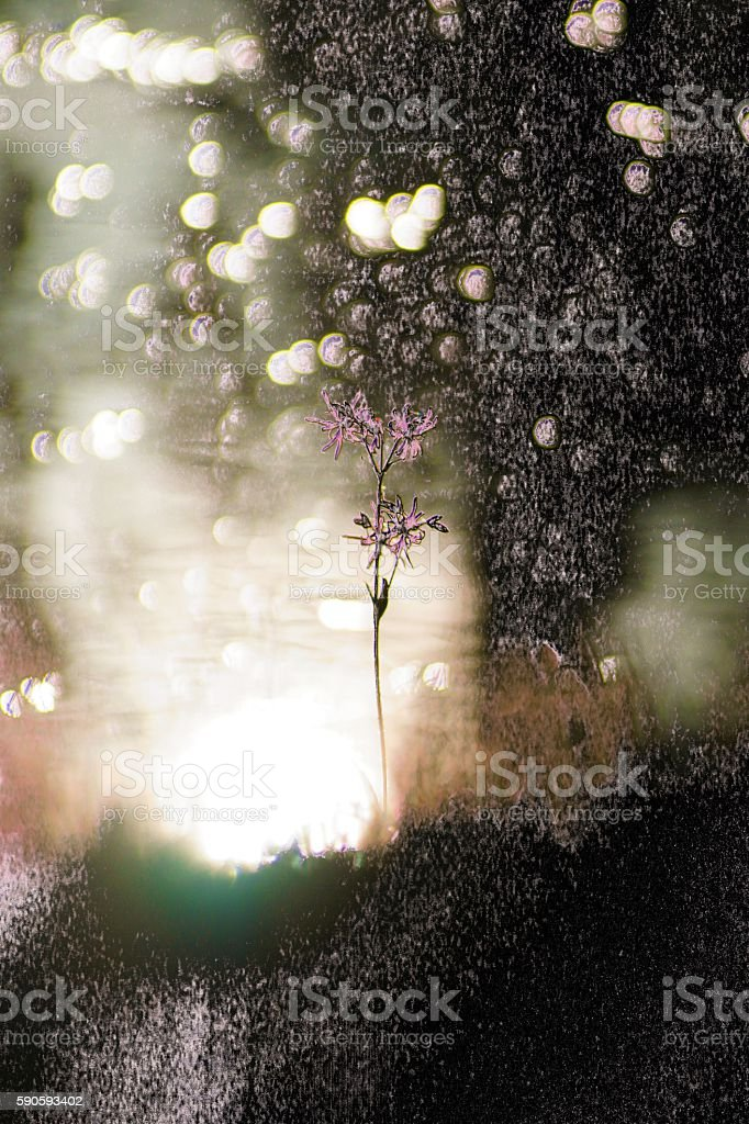 flora-abstraction stock photo