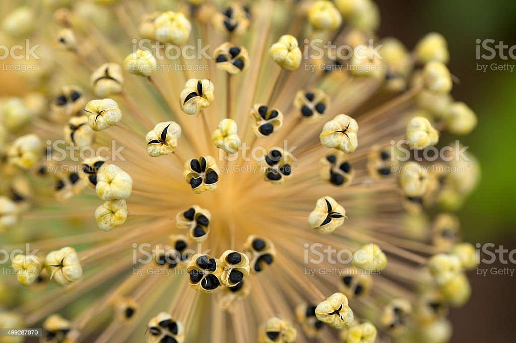 Floral abstract stock photo