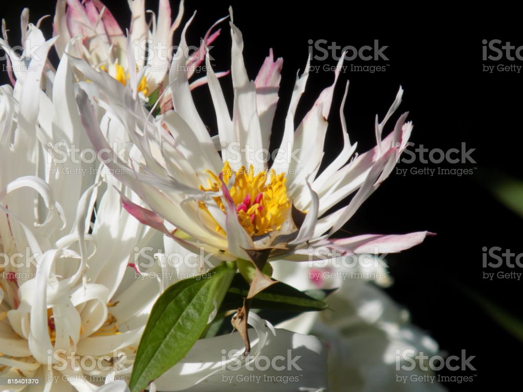 Floral and wildlife stock photo