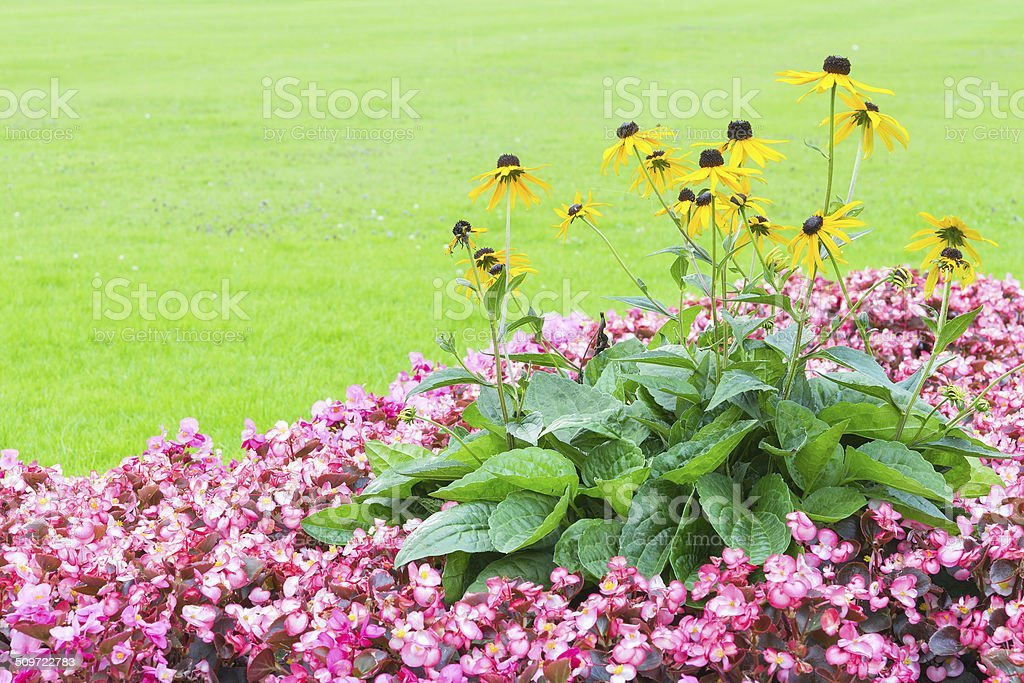 Floral angle wallpaper with pink and yellow flowers stock photo