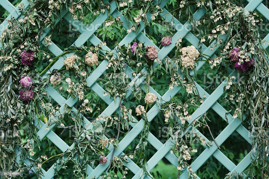 Floral arch from dried flowers on decorative lattice in garden stock photo