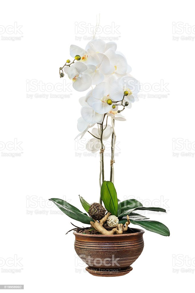 Floral arrangement from artificial orchid flowers. stock photo