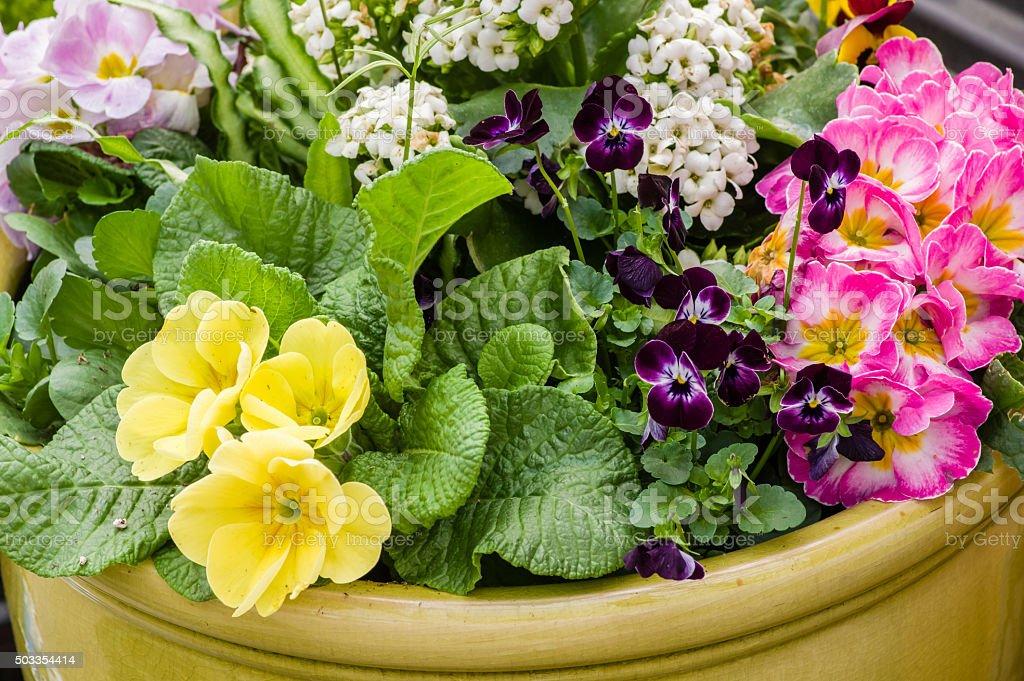 Floral arrangement with live plants stock photo