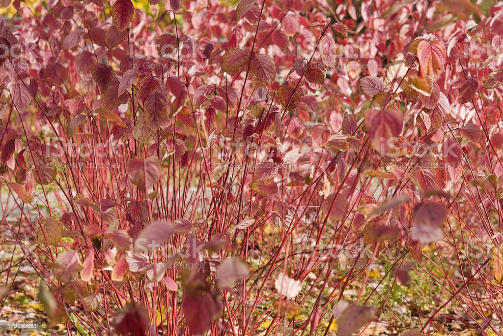 Floral autumn background royalty-free stock photo