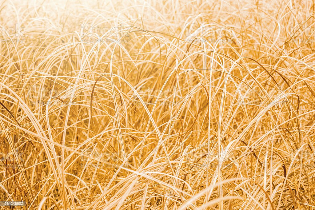 floral background. autumn field with dry grass stock photo