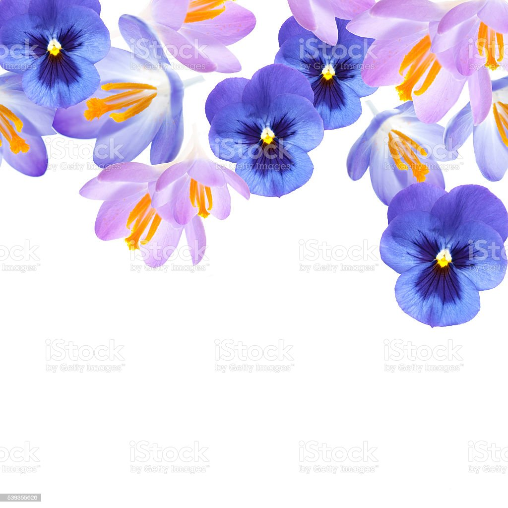 floral background isolated on a white stock photo