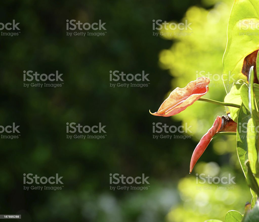 Floral background. royalty-free stock photo