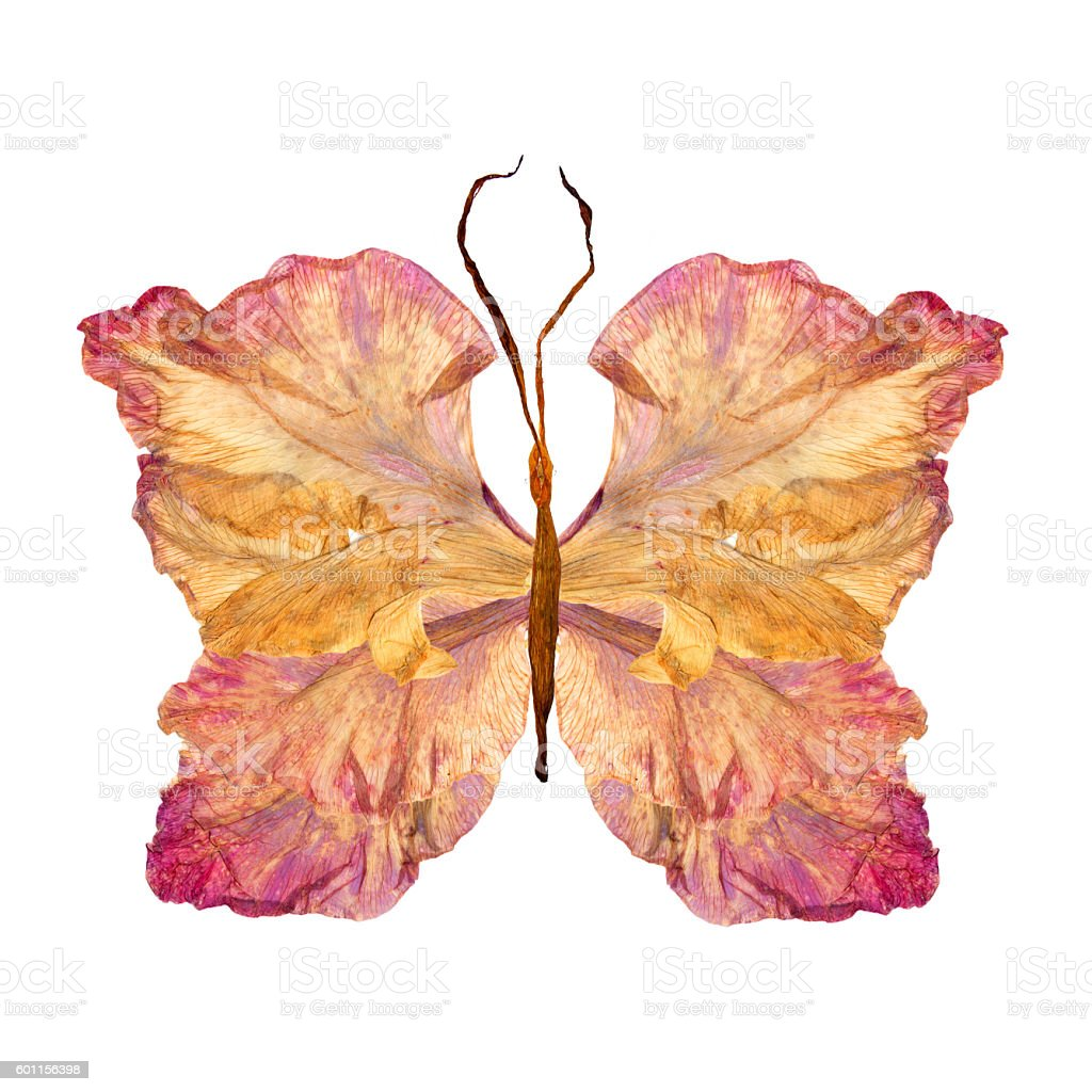 floral butterfly made from gladiolus flower stock photo