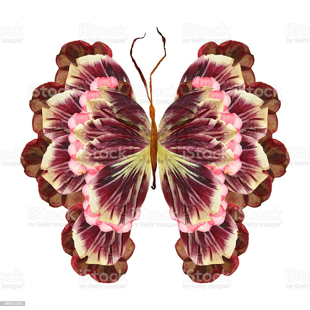 floral butterfly made of flowers stock photo