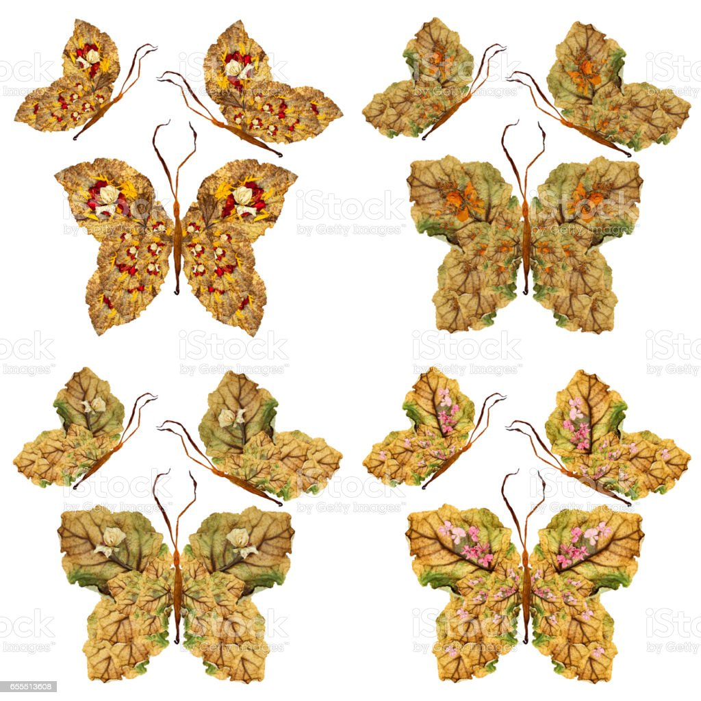 floral butterfly made of lily petals leaves and flowers stock photo
