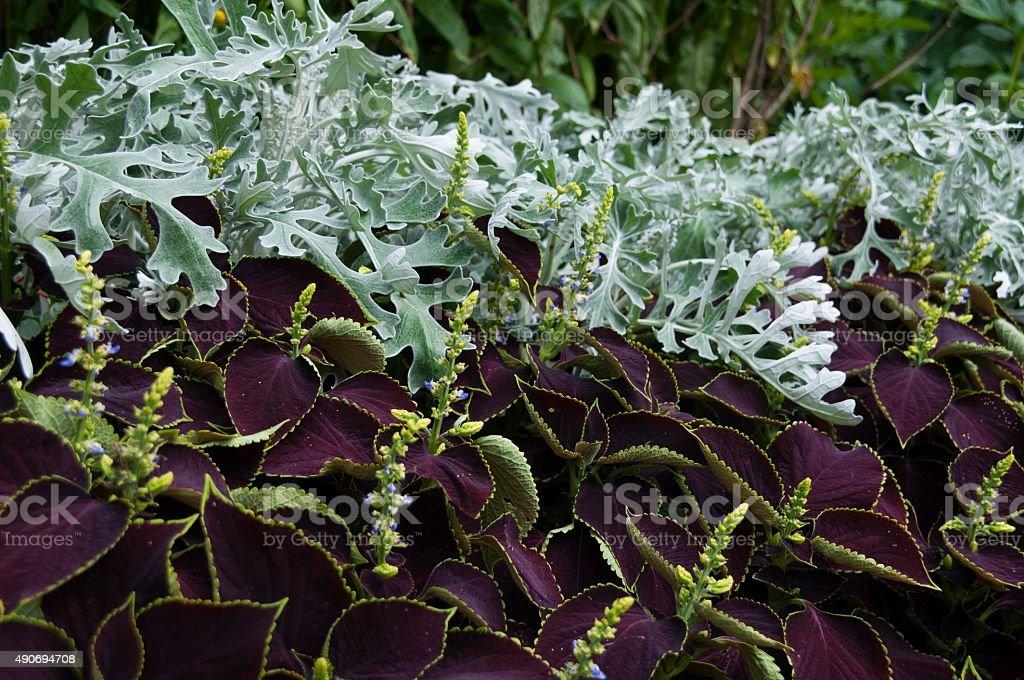 Floral colours stock photo