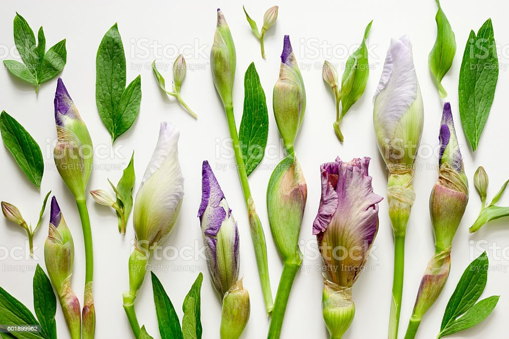 Floral composition background stock photo